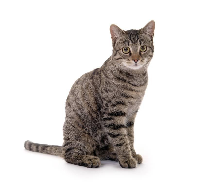 Daten-Webseiten für Katzen