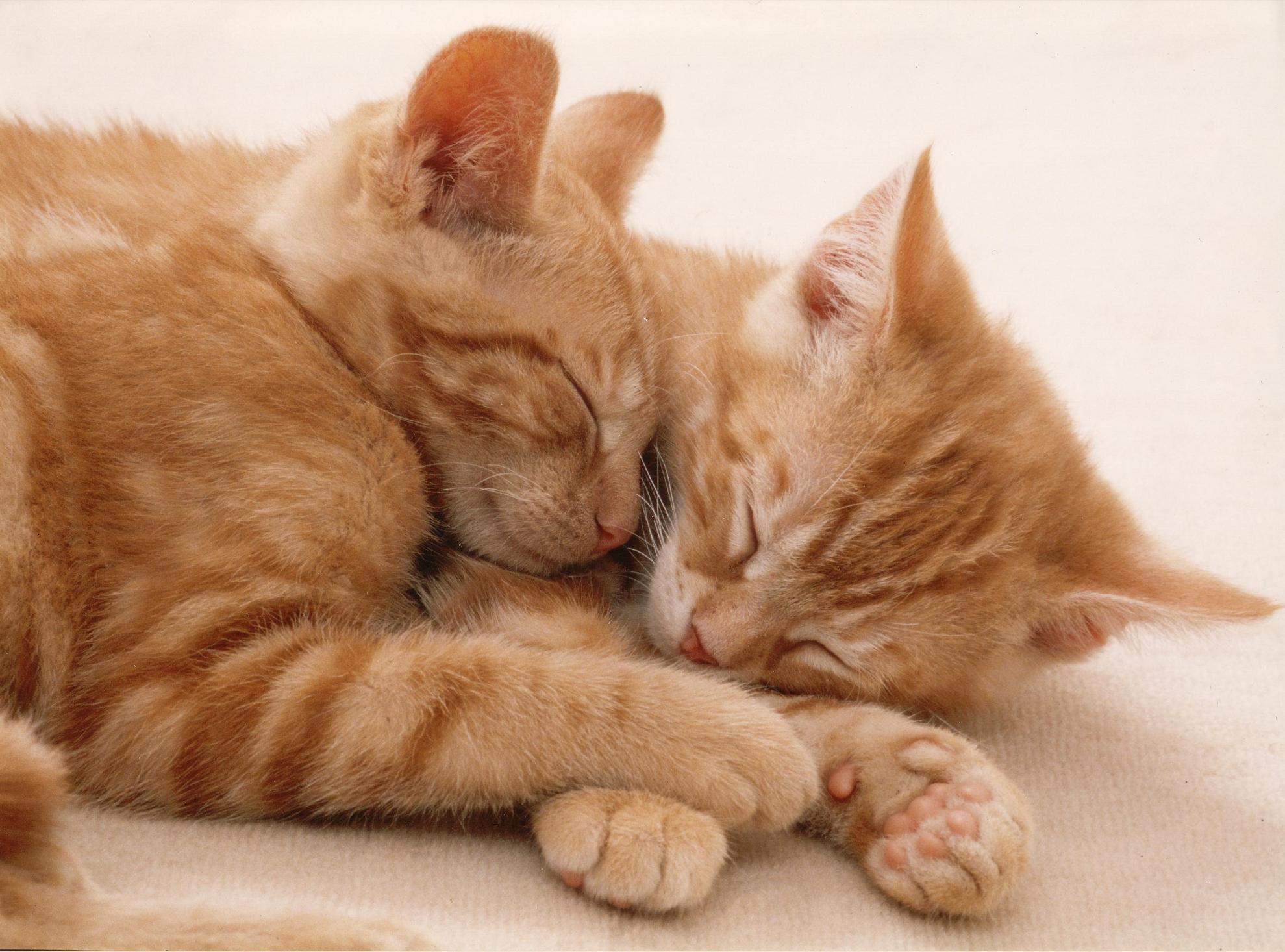 Katzen In Der Wohnung